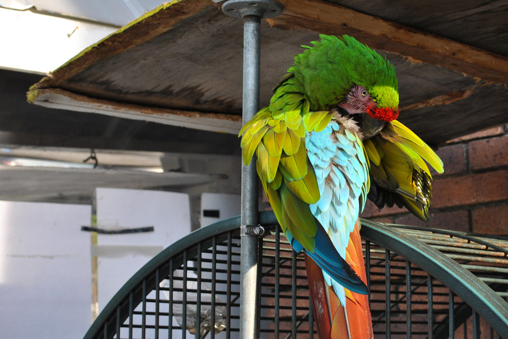 Candid Parrot - Key West, FL | Photography Services